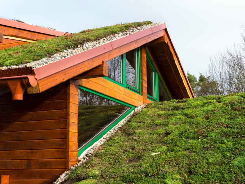 Green roof or green cover
