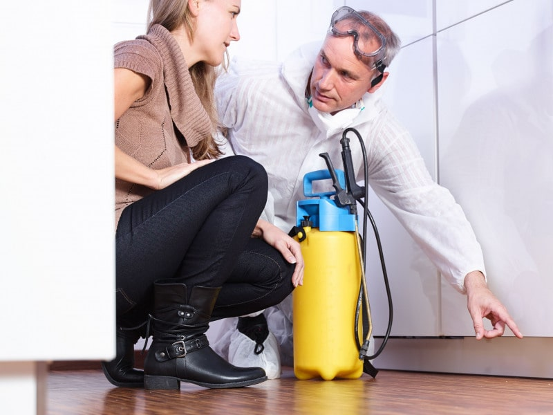 Types of Pest Control Puyallup